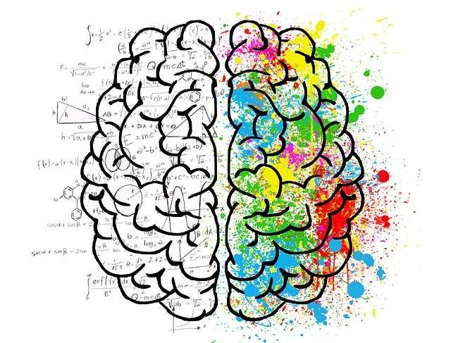 brain 2062057 640 - Có thể bạn chưa biết? Não bộ đàn ông và phụ nữ không hề giống nhau